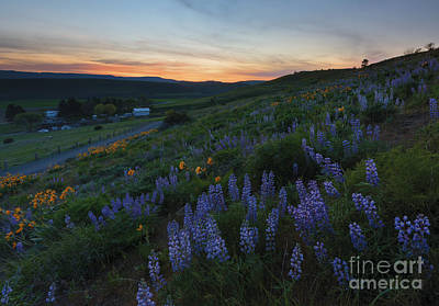 Country Meadow Sunset Print by Mike Dawson