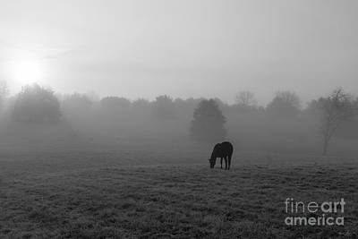 Photograph - Country Morning Grayscale by Jennifer White
