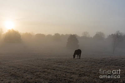 Photograph - Country Morning by Jennifer White