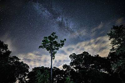 Long Leaf Pine Photograph - Country Nights by JC Findley