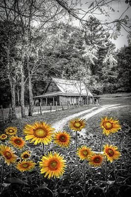Photograph - Country Paths Yellow Sunflowers In Black And White by Debra and Dave Vanderlaan