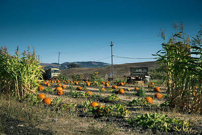 Photograph - Country Pumpkin Patch by Kim Wilson