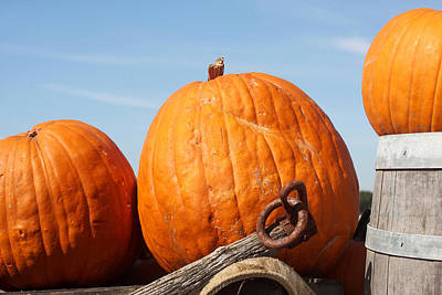 Photograph - Country Pumpkins by Art Block Collections