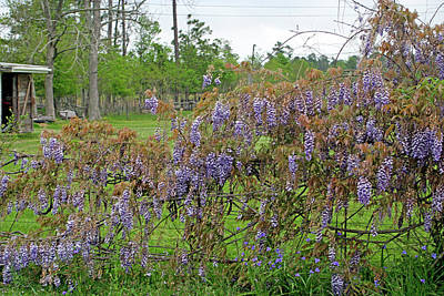 Photograph - Country Purple by Cora Wandel