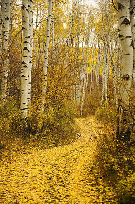 Ron Woods Photograph - Country Road And Aspens 1 by Ron Dahlquist - Printscapes