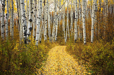Ron Woods Photograph - Country Road And Aspens 2 by Ron Dahlquist - Printscapes