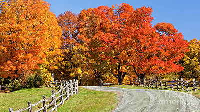 Photograph - Country Road Autumn by Alan L Graham