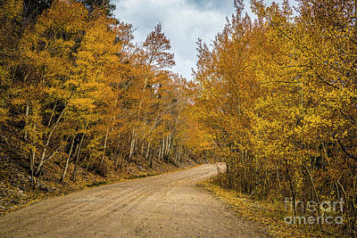 Abstract Trees Mandy Budan - Country Road by Jon Burch Photography