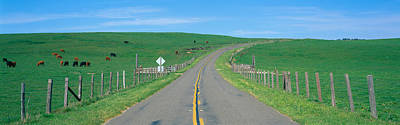 Point Reyes National Seashore Photograph - Country Road Separating Pastures by Panoramic Images