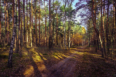 Photograph - Country Road Through The Forest by Dmytro Korol