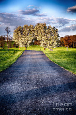 Country Road With Blooming Trees Art Print