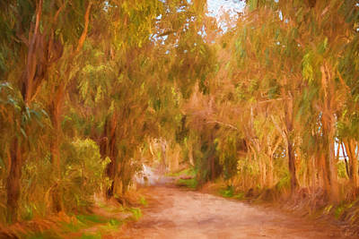 Gumtree Photograph - Country Roads 1 by Michelle Wrighton