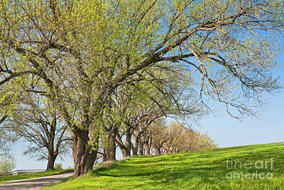 Photograph - Country Spring by Alan L Graham