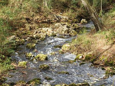 Photograph - Country Stream by Tim Townsend