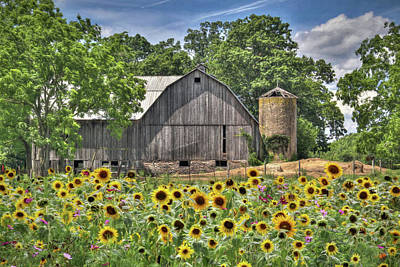 Country Sunflowers Art Print by Lori Deiter