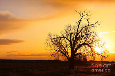 Pink Photograph - Country Sunrise by James BO  Insogna