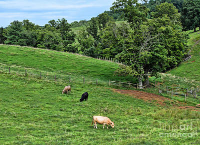 Photograph - Country Views - Cows In The Pasture by Kerri Farley