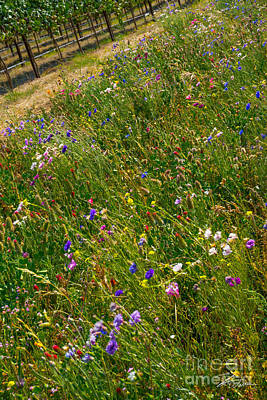 Photograph - Country Wildflowers I   by Shari Warren