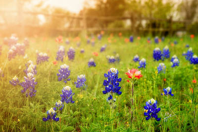 Photograph - Country Wildflowers by TK Goforth