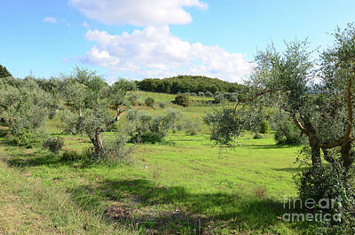 Countryside In Tuscany Italy In The Province Of Siena Art Print by DejaVu Designs