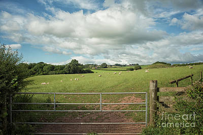 Photograph - Countryside In Wales by Patricia Hofmeester