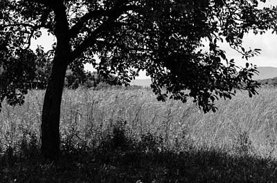 Photograph - Countryside Of Italy Bnw by Andrea Mazzocchetti