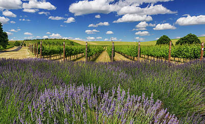 Photograph - Countryside Vinyard by Mark Kiver