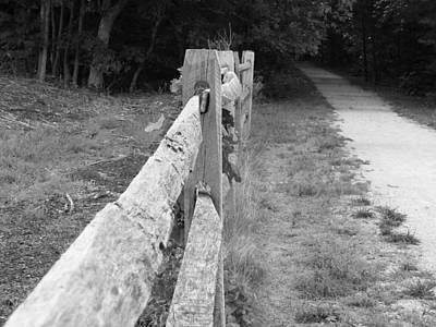 County Fence  Art Print by D R TeesT