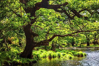 Photograph - County Kerry Ireland by Debra and Dave Vanderlaan