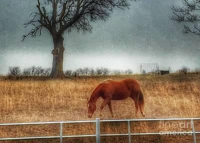 Photograph - County Road 4100 by Jenny Revitz Soper