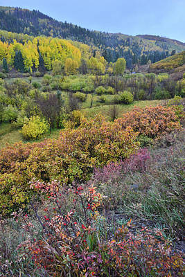 Photograph - County Road 9 Color - Dallas Creek by Ray Mathis