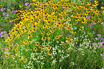 Photograph - County Road Wildflowers - Florida by rd Erickson