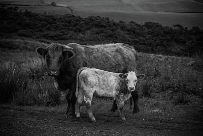 Sottish Photograph - Couple A Coos 3 by Thomas Morrison