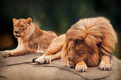 Photograph - Contented Couple by Maria Coulson
