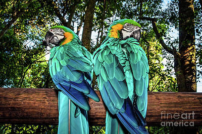 Photograph - Couple Of Macaw Parrots by Anna Om