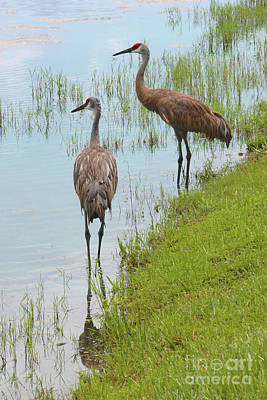 Photograph - Couple Of Sandhills By Pond by Carol Groenen