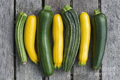 Home Grown Photograph - Courgette Harvest by Tim Gainey