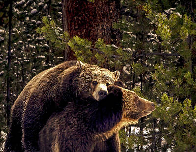 Photograph - Courting Grizzlies by Bruce J Barker