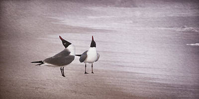 Photograph - Courtship Dance Of The Laughing Gulls II by Leda Robertson