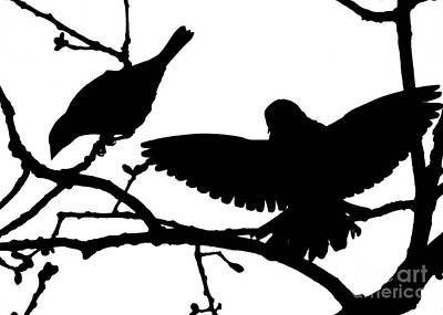 Photograph - Courtship In Silhouette by Jean Wright