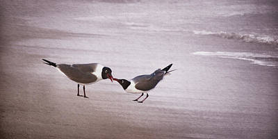Photograph - Courtship Of The Laughing Gull I by Leda Robertson