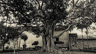 Santa Barbara Photograph - Courtyard Tree by Amy Bliss