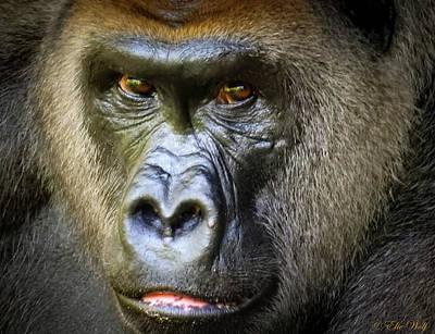 Gorilla Photograph - Cousin, No. 16 by Elie Wolf