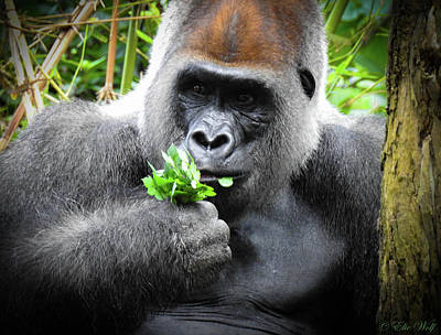 Gorilla Photograph - Cousin Number 18 by Elie Wolf