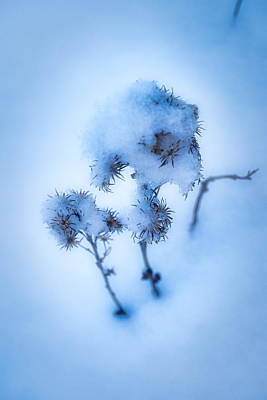 Photograph - Covered In Snow by Cathy Mahnke