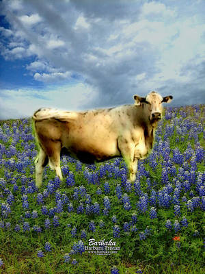 Photograph - Cow And Bluebonnets by Barbara Tristan