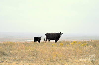 Photograph - Cow And Calf by Anjanette Douglas