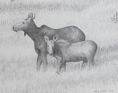 Maine Mountains Drawing - Cow And Calf Moose  by Harry Moulton