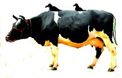 Photograph - Cow And Crows by Anand Swaroop Manchiraju