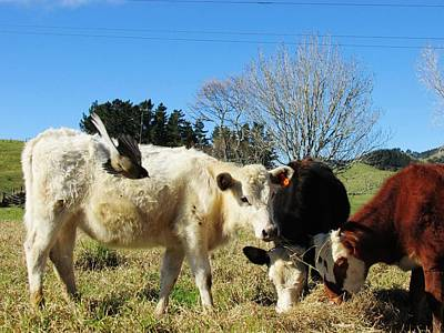 Photograph - Cow And Fantail Photobomb by Dianne Connolly